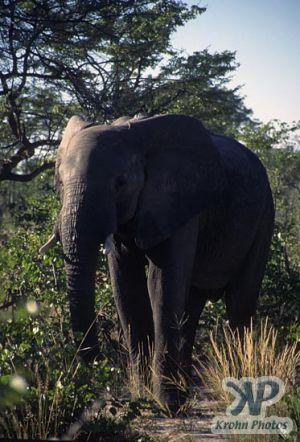 cd14-s25.jpg - Elephant
