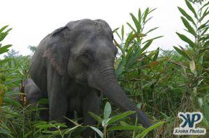 dvd1000-d175.jpg - Elephant