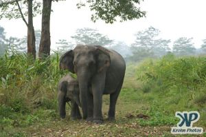 dvd1000-d176.jpg - Indian Elephants