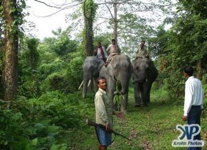 dvd1000-d177.jpg - Indian Elephants