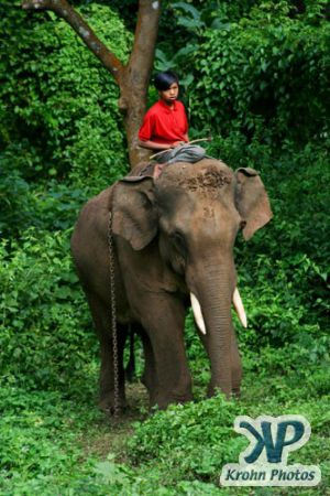 dvd1000-d178.jpg - A boy and his elephant