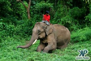 dvd1000-d179.jpg - Indian Elephant