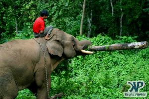 dvd1000-d180.jpg - Indian Elephant