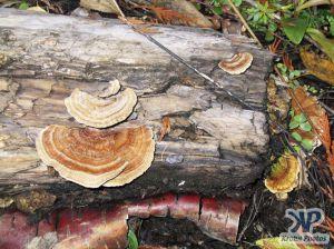 cd117-d15.jpg - Fungus