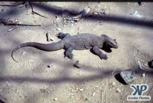 dvd1001-s02.jpg - Komodo Dragon