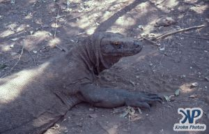 dvd1001-s04.jpg - Komodo Dragon