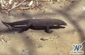 dvd1001-s14.jpg - Komodo Dragon