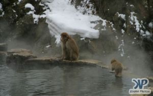 cd1014-d04.jpg - Baby Monkey and Mother