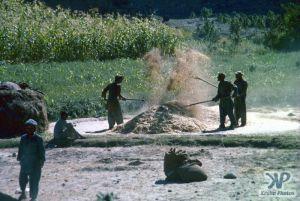 cd04-s19.jpg - Farmers at work
