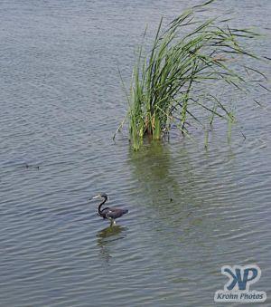 cd31-d06.jpg - Padre Island