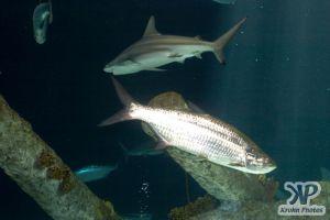 cd132-d11.jpg - Fish