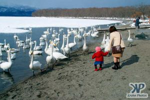 cd1013-d02.jpg - Feeding the Swans