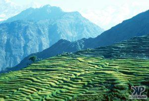 cd50-s01.jpg - Farming in Nepal
