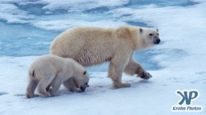 Scan-090716-0002.jpg - Polar Bears