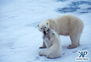 Scan-090716-0004.jpg - Polar Bears