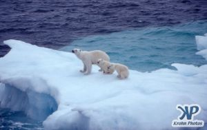 Scan-090829-0011.jpg - Polar Bears