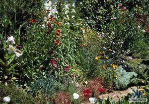 cd1000-s19.jpg - Garden Scene