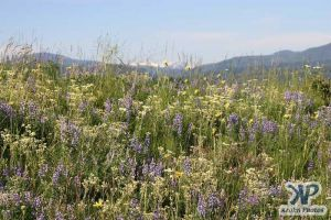 cd17-d31.jpg - Wild flowers