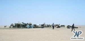 dvd1000-s108.jpg - Herd of Camels