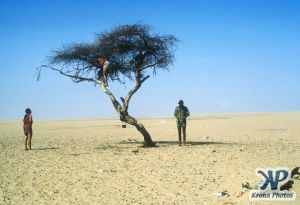 dvd1000-s132.jpg - Tree of Tenere