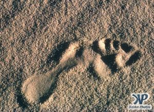 dvd1000-s140.jpg - Footprint