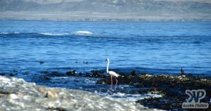 cd10-s21.jpg - Flamingo