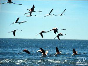 cd11-s18.jpg - Flamingos
